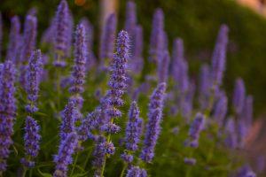 planten tuinonderhoud